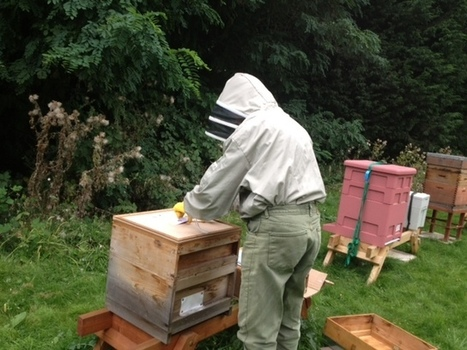 Wanstead bees come a cropper | Bees and beekeeping | Scoop.it