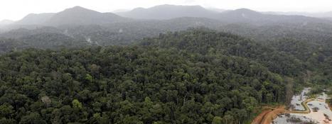 Conférence sur la biodiversité : les Amérindiens de Guyane veulent sauver la nature... et leur culture | Biodiversité & Relations Homme - Nature - Environnement : Un Scoop.it du Muséum de Toulouse | Scoop.it