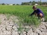 Le Vietnam s'adapte aux changements climatiques | Liên-Viêt Réseau culturel France Vietnam | Scoop.it