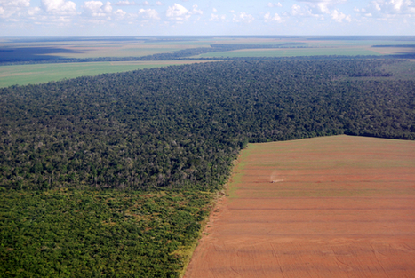 Deforestation: Facts, Causes & Effects | Rainforest Research | Scoop.it