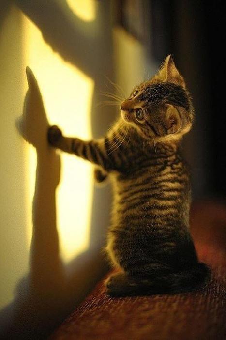 Twitter / fabulousanimals: Kitten meets his shadow ... | Cat Times | Scoop.it
