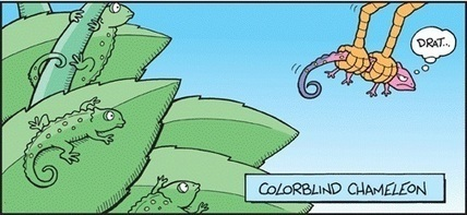 Blind Chameleon also Changes his Color – Fact | Facts Village | Funny Pics Online | Scoop.it