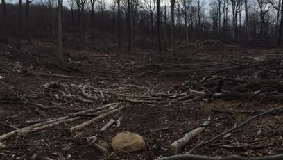 Petition: Save Sparta Mountain From Logging | Our Evolving Earth | Scoop.it