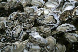 Interdiction temporaire de consommation des huîtres et des coquillages en provenance du banc d'Arguin | Actualité de l'Industrie Agroalimentaire | agro-media.fr | Scoop.it