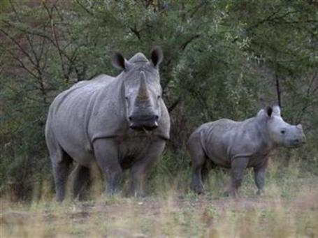 Poachers make 2012 a deadly year for Africa's rhinos, elephants | Wildlife Trafficking: Who Does it? Allows it? | Scoop.it
