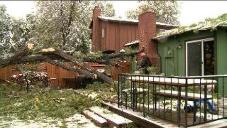 Storm damages trees, tips can help improve safety - kdvr.com | tree risk | Scoop.it