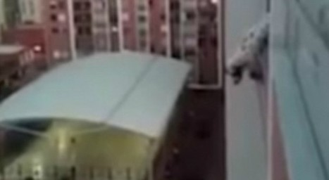Nail biting video of hero saving dog from high story apartment window ledge | Compassion in Action | Scoop.it