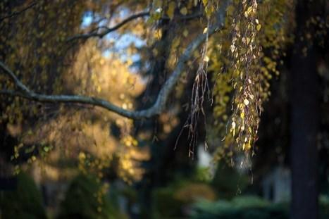 Langsam aber sicher wird es Herbst. | All about photography | Scoop.it