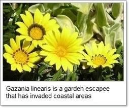 Australian Plants now Outnumbered!   Australian Plants on the Web   Scoop.it