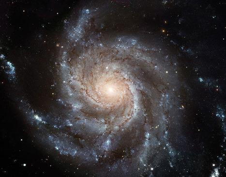 Socionomics and Fibonacci: The Golden Ratio Governs Life Beauty and the Universe   Socionomics   Scoop.it