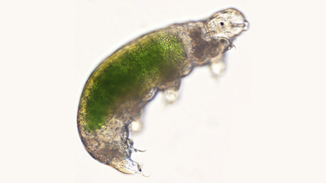 Water Bears Revived By Scientists After Being Frozen For 30 Years | Amazing Science | Scoop.it