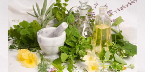 Beneficios De Las Plantas Silvestres Comestibles | http-www-scoop-it-saludynutriciononline-com | Scoop.it