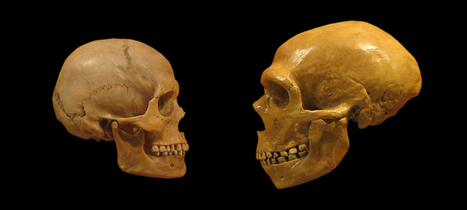 Neanderthals aren't grunting, club-wielding idiots – we are | Archéologie dernières brèves | Scoop.it