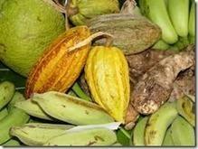 Agro-Business Africain Alternatif | Business en Afrique | Scoop.it