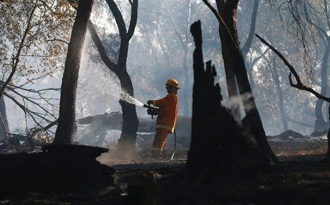 Wildfires across Australia and the US's hottest year on record: the heat that's making history - Telegraph | Climate Chaos News | Scoop.it