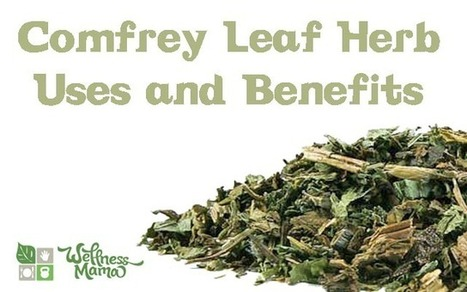 How to use Comfrey Leaf Herb as a Natural Remedy - Wellness Mama | Alterternative medicine | Scoop.it