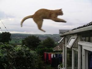#Idiotdujour : il fornique avec un chat et le jette par la fenêtre « Rendez-Vous En Terre Mal Connue   L'Idiot Du Jour   Scoop.it