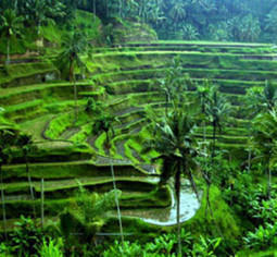 ASILE 2014 - Post-Conference Language & Culture Program in Ubud, Bali   Indonesian Language and Culture   Scoop.it