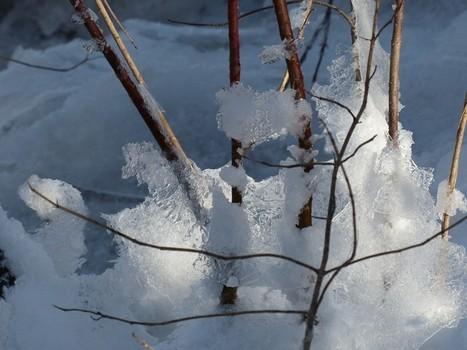 Hiver au Québec - Canada - Entre neige, glace et lumière - Winter in Quebec - Canada - Between snow, ice and sun light   Faaxaal Forum Photos gratuite Faune et Flore   Scoop.it