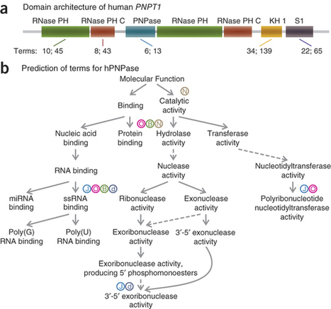 A large-scale evaluation of computational protein function prediction : Nature Methods : Nature Publishing Group | Plant-Microbe Interaction | Scoop.it