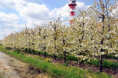Baumblüte im Alten Land hat begonnen | Maiselbiene | Scoop.it