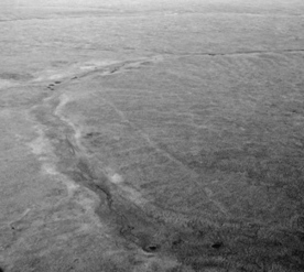 Oil exploration causing long-term damage to arctic tundra - Conservation News - Conservation Maven | Arctic Tundra | Scoop.it