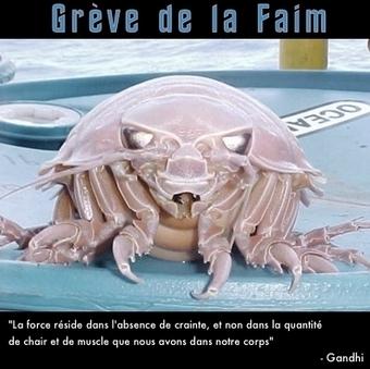 Le Bathynomus giganteus, une horloge et Star Wars... / France Inter   EntomoScience   Scoop.it