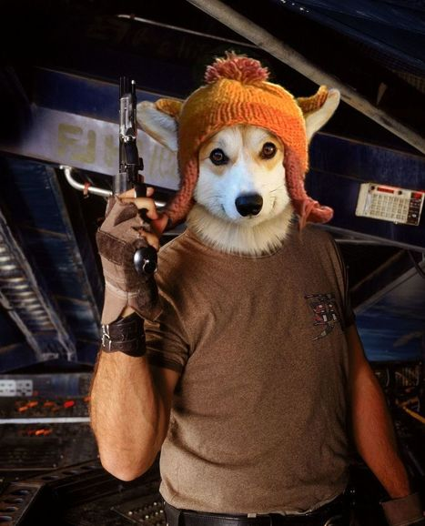7 ways Redditors used Photoshop to make this Corgi a hero | Strange days indeed... | Scoop.it