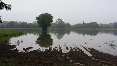 """Un début de moisson """"catastrophique"""" en Ile-de-France   Nature to Share   Scoop.it"""
