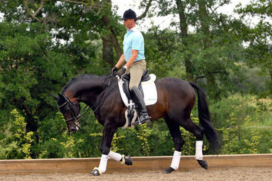 Tips from Carl Hester | Equine massage | Scoop.it
