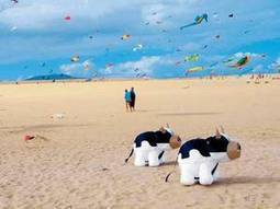 Drachenfest auf Fuertaventura | Gesundheit | Scoop.it