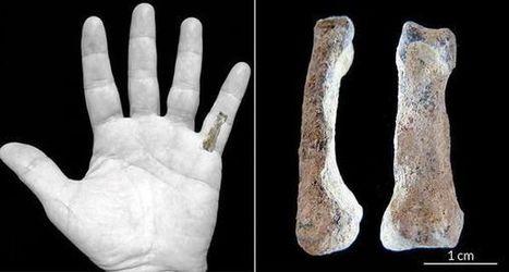 La plus ancienne main moderne daterait de 1,84 million d'années | Aux origines | Scoop.it