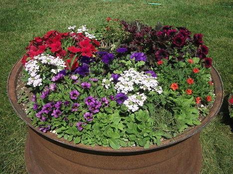 Yard Garden | Gardening | Scoop.it