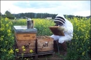 Une charte pour sauver les abeilles - LaDépêche.fr | Abeilles, intoxications et informations | Scoop.it