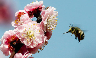 Bees and plants communicate via electric signals, say scientists | Healthy Living Lifestyle | Scoop.it