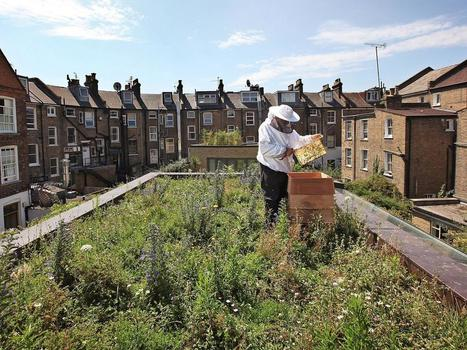 Urban beekeeping 'not reversing declining countryside populations' | Greenroofs & Urban biodiversity | Scoop.it