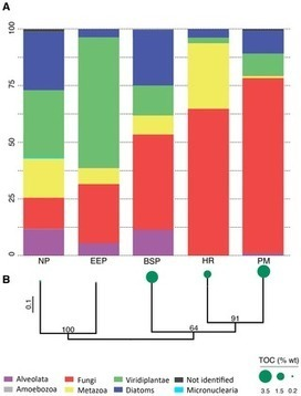 Deep Sequencing of Subseafloor Eukaryotic rRNA Reveals Active Fungi across Marine Subsurface Provinces | Genomics and metagenomics of microbes | Scoop.it