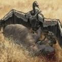 Des robots animaux africains pour lutter contre le braconnage | Galatée | Scoop.it