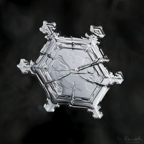 Crystal Clear Snowflake Photos by Don Komarechka - My Modern Metropolis | Le It e Amo ✪ | Scoop.it