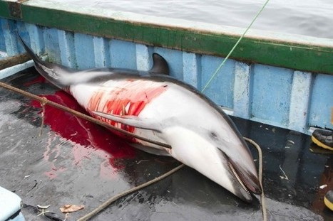 Dolphin Slaughter Fueled by Illegal Shark Trade - National Geographic | Environmental Education & Wildlife Conservation | Scoop.it