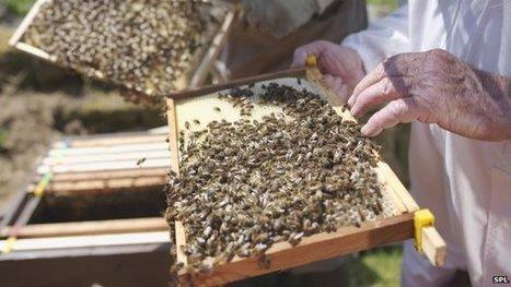 Bad winter sees 'huge loss of bees' | 100 Acre Wood | Scoop.it