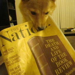 Cool dog tricks #1: How to train your dog to Read | How to train your dog | Scoop.it