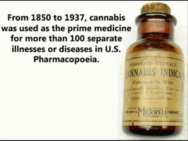 The Mind Unleashed: Cannabis Cures Cancer and the Government Knows It | Health Supreme | Scoop.it