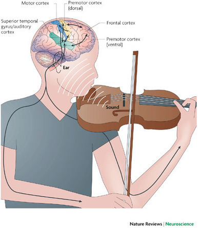 8 Surprising Ways Music Affects and Benefits our Brains | Music | Scoop.it