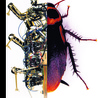 Nanotechnology, biomimetics and biological interface in the field of robotics.