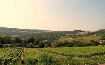 Burgundy split over new Cote d'Or appellation plan | Burgundy Flavour | Scoop.it