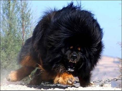 Tweet from @TheFactsBook | Dogs Gone Wild | Scoop.it