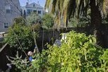Meyer lemons first crop in an S.F. program to map locally grown food - The Sacramento Bee | Food issues | Scoop.it