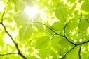 Scientists Discover Methods of Harvesting Electricity from Plants | sustainable innovation | Scoop.it