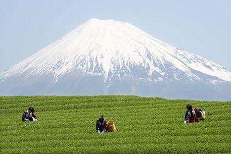 El monte Fuji ya es Patrimonio de la Humanidad   Japon   Scoop.it